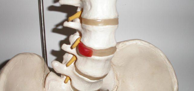 Anatomische Modelle