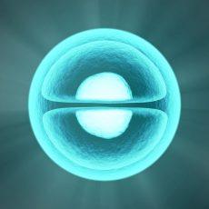 Die unsterbliche Zelle?