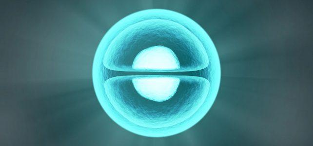 X39 aktiviert Stammzellen